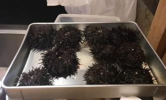 sea urchin from Tokyo fish market